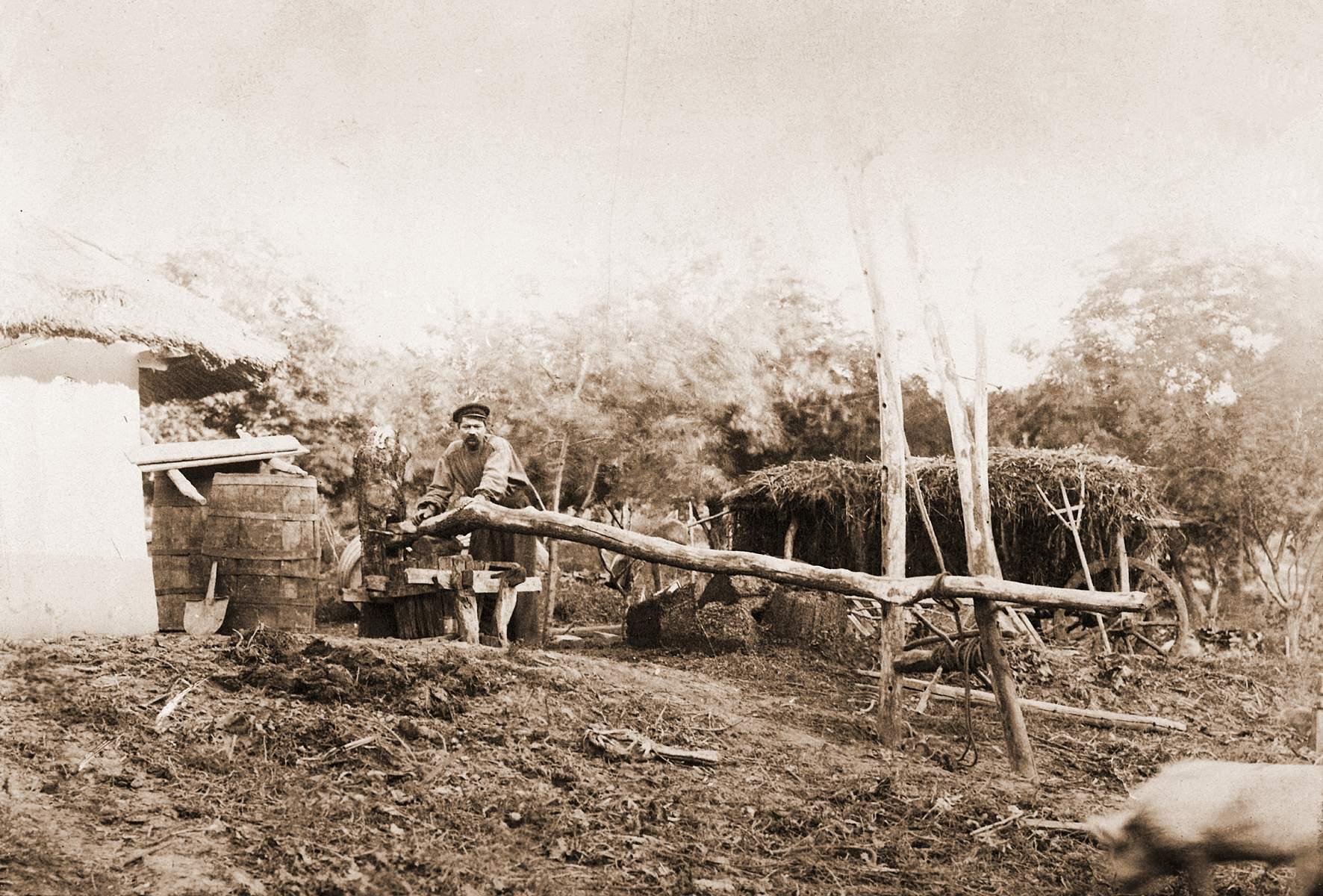Выжимка винограда Кишинев 1901