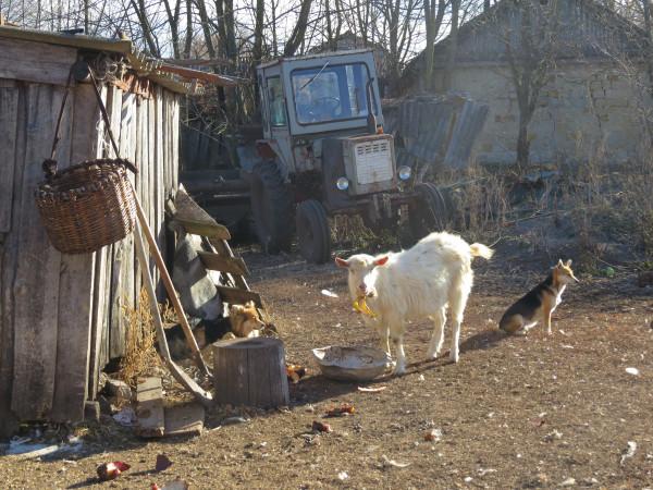 деревня Мешково