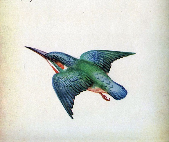07kingfisher7
