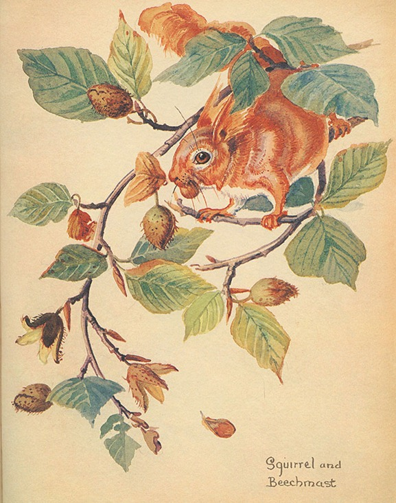 10squirrel7