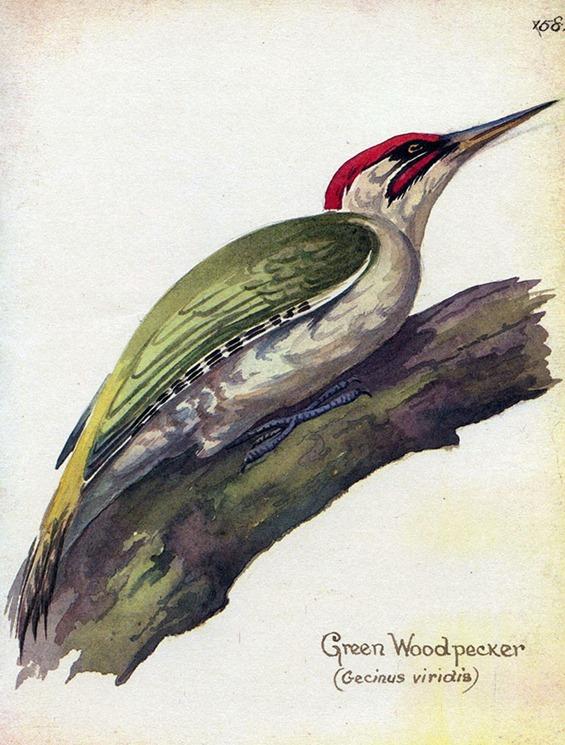 11GreenWoodpeck7