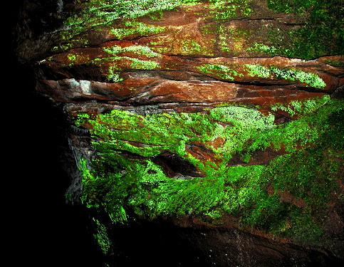 Светящийся мох шистостега