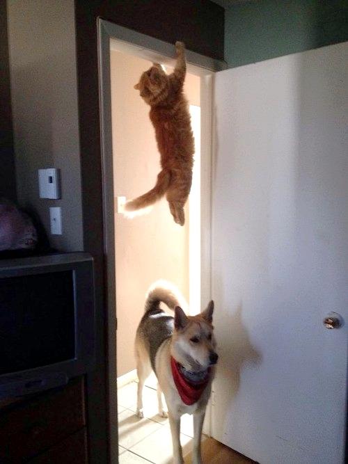 вы кота не видели