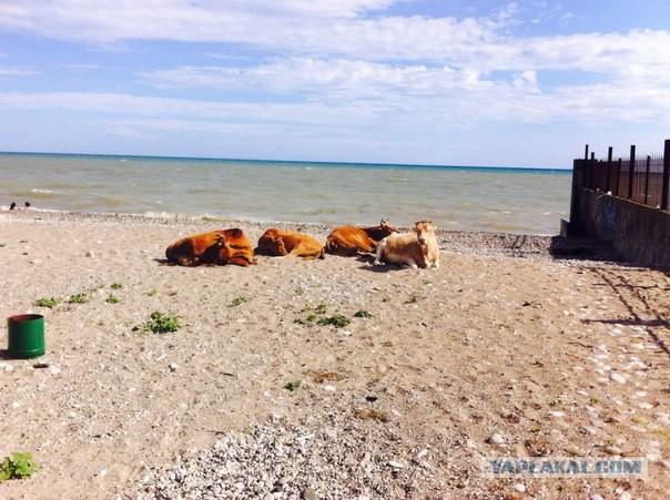 82)Телки на пляже без купальников