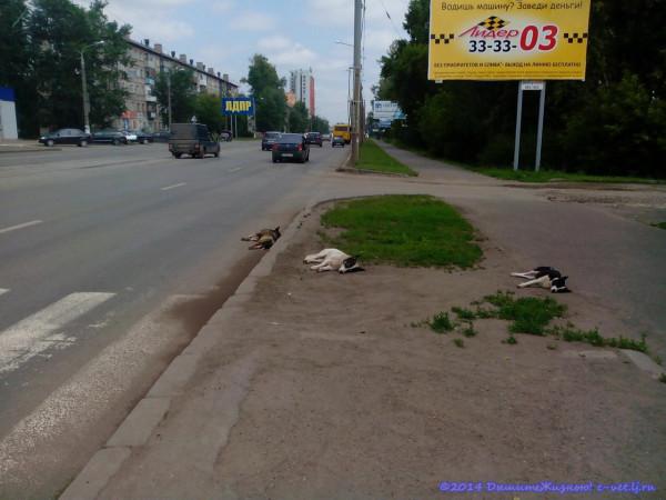 Ижевские собаки
