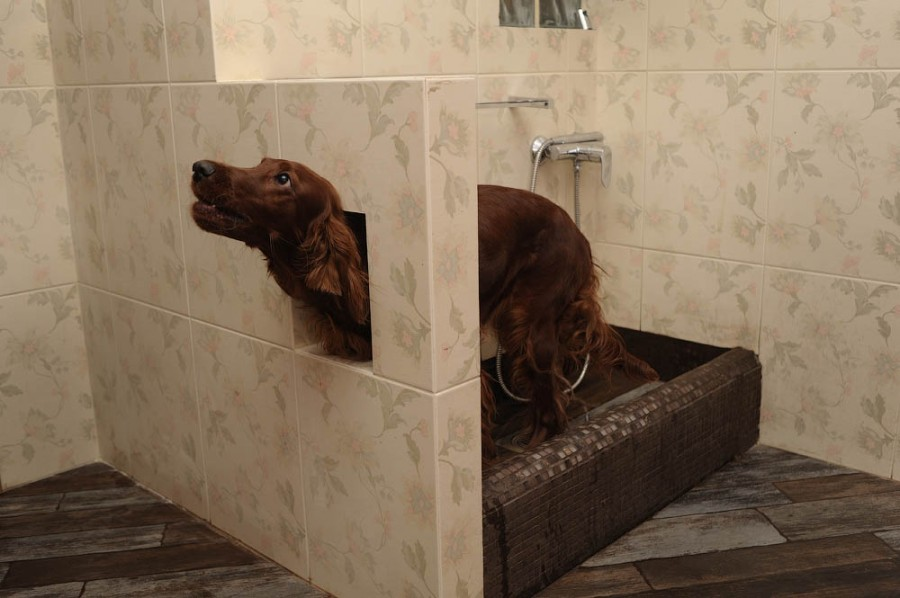 Лапомойка для собак своими руками