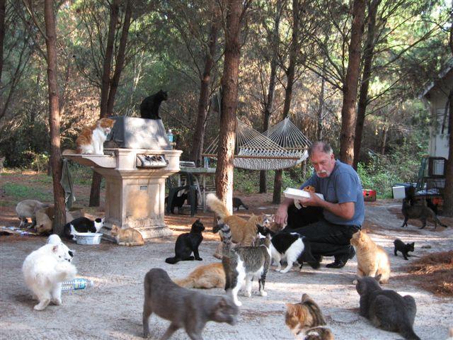 Самый большой приют для кошек