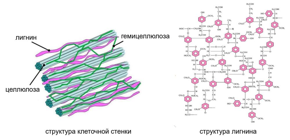 полимеры стенки.png