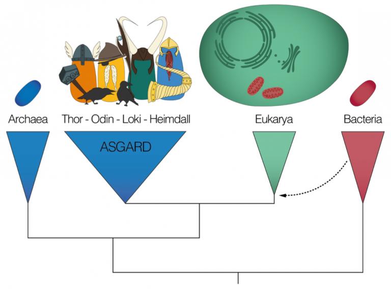 Asgard-1-768x578.png