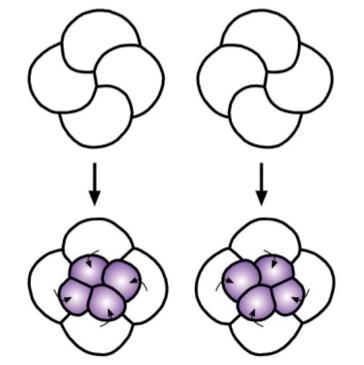 spiral_enantiomer