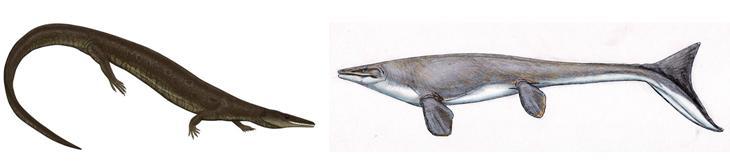 mosasaur-and-aigialosaur
