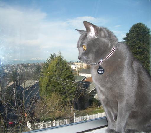 Meushi at my bedroom window