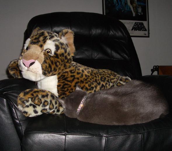 cat snuggling cat