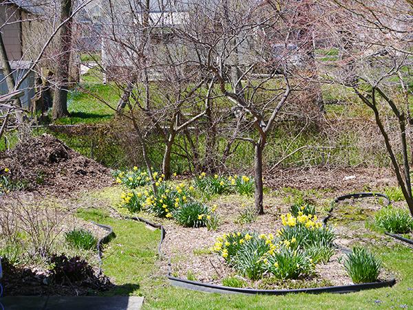 springBackyard