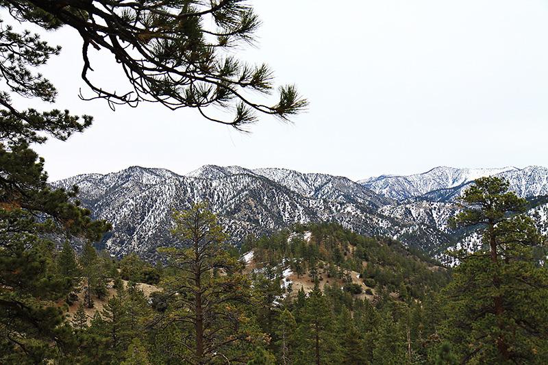 Рождество в Калифорнии: снег, пальмы и тихоокеанский бриз 17