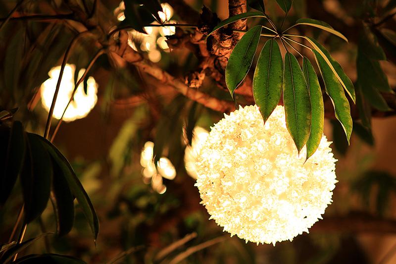 Рождество в Калифорнии: снег, пальмы и тихоокеанский бриз 097