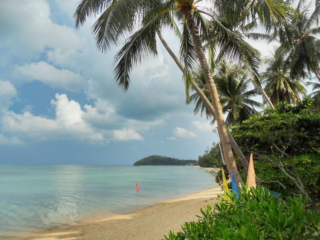 тайланд остров самуи отзывы с фото немного колючий