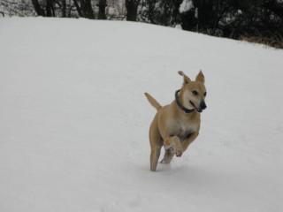 My girl Lilly enjoying the snow