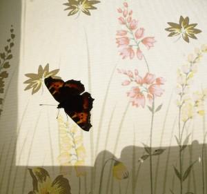 butterflyblind
