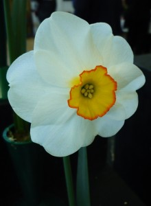 flowershowspring14best