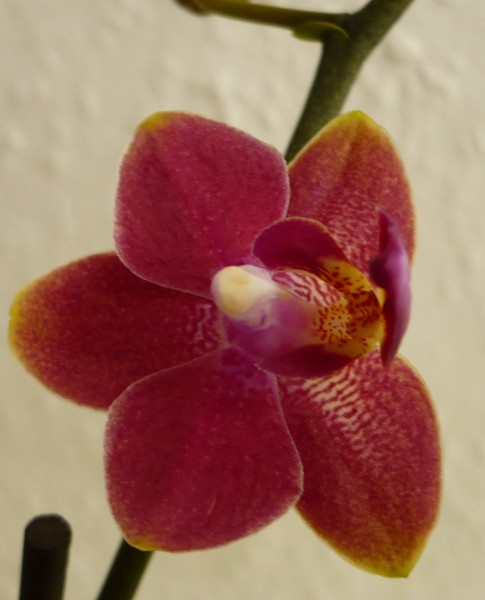 260714orchid2