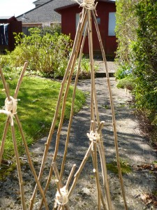 070415plantsupports