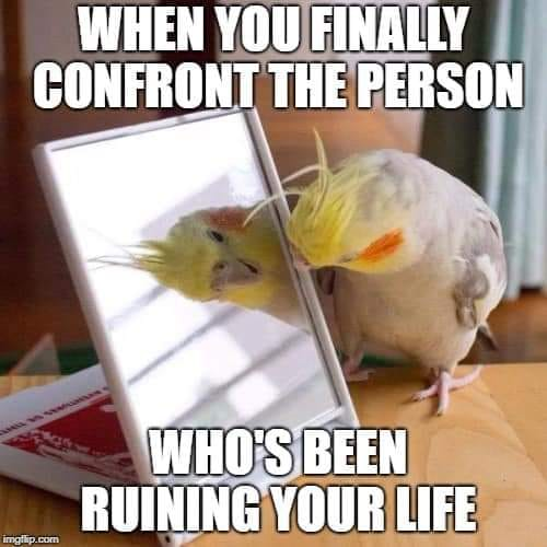 Cockatiel meme that shows a cockatiel getting angry at a mirror with the caption when you finally confront the person who's been ruining your life
