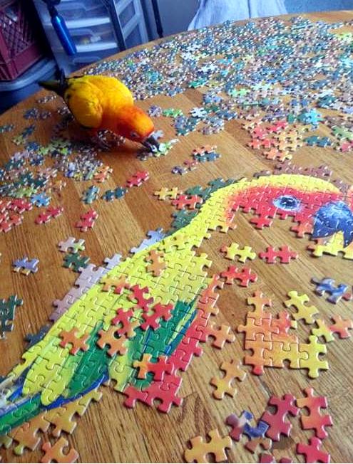 parrotpuzzle