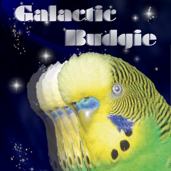 galacticbudgie_sq.jpg