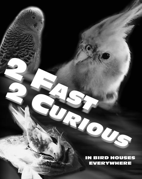 fastfurious_WEB2