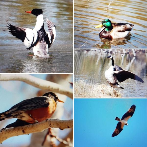 Variety of wild birds