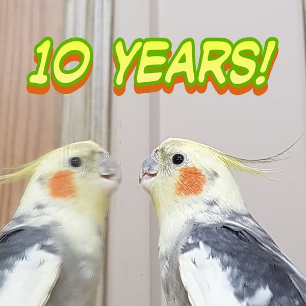 10 years with Muffin the cockatiel
