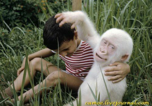 1361945736_zhivotnye-albinosy-9