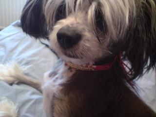 Matade sin hund med porraktrisen