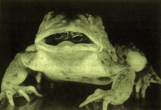 mutant toad