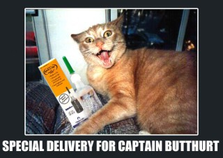 Demotivational LOLCat: orange tabby with ears back and mouth wide open, next to enema kit, caption Special Delivery for Capt Butthurt