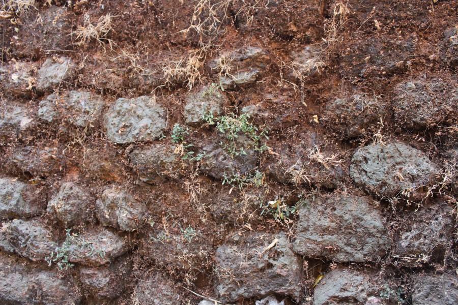 Старинные стены покрылись мхом и растительностью