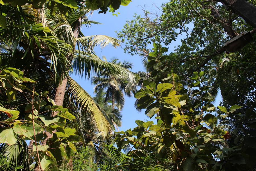 И благодатная тень от тропической растительности