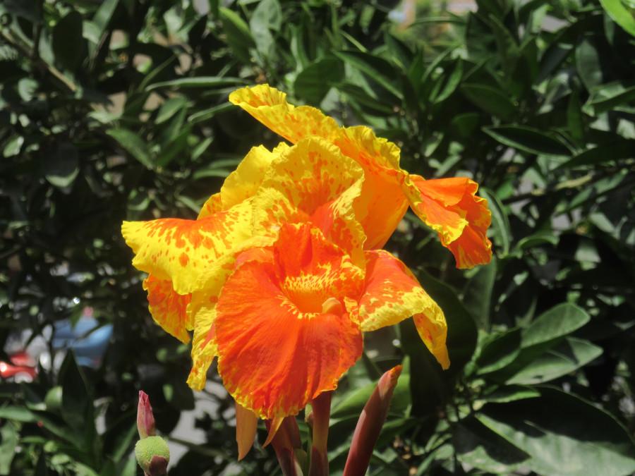Цветок в Гоа