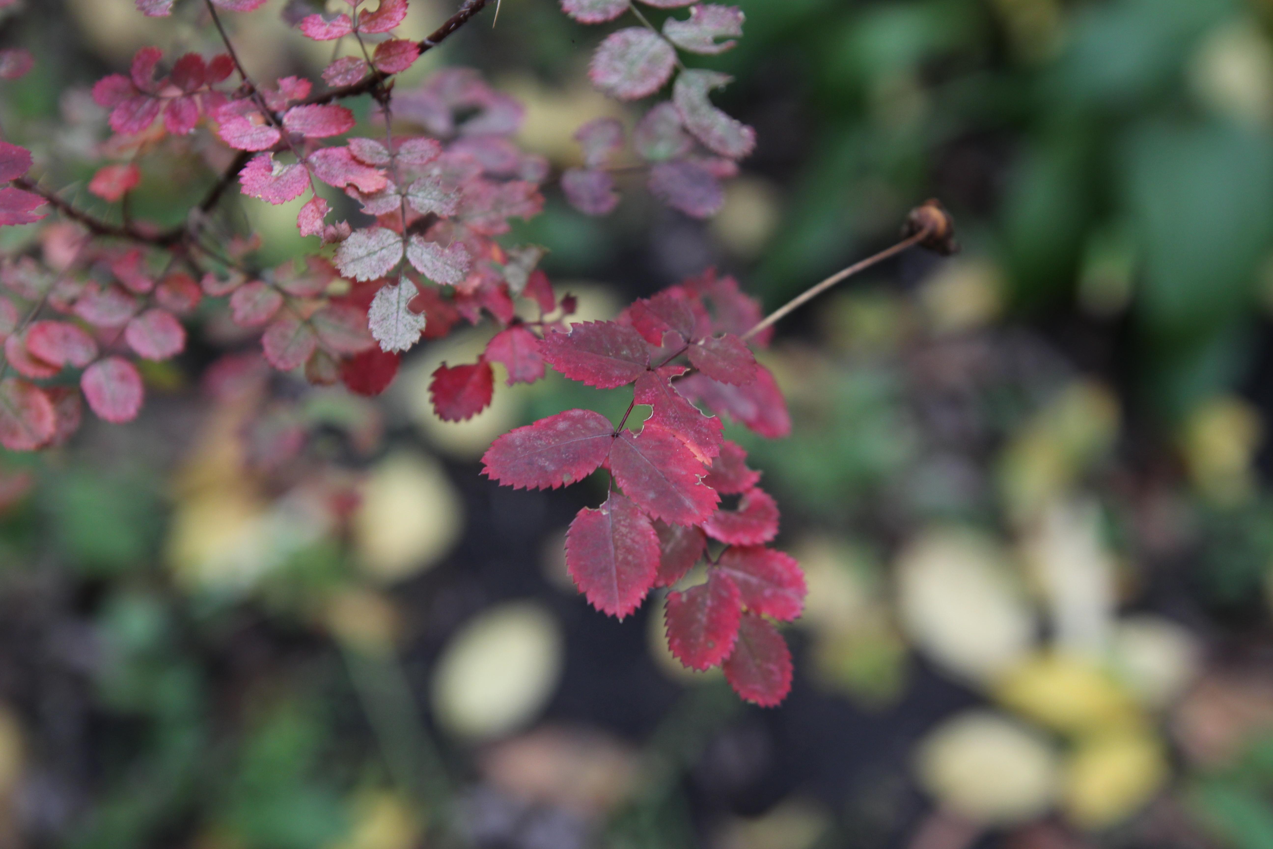 Листья странной красной формы