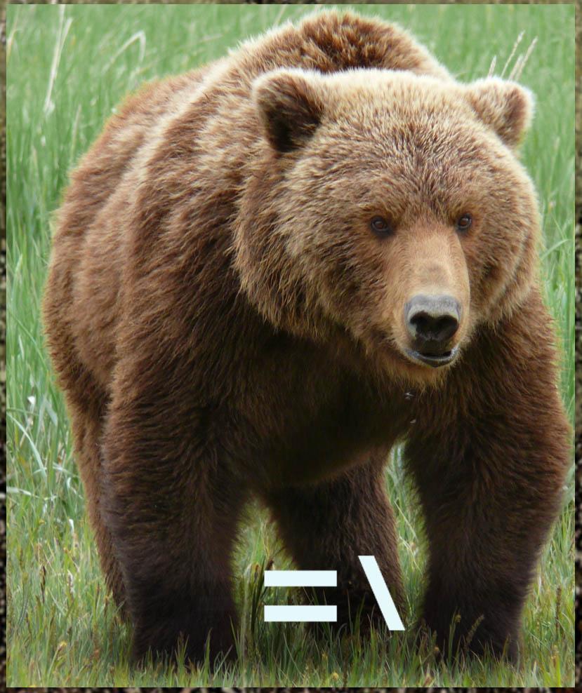 Grizzly Bear Wildlife