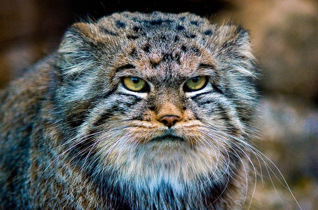 Смотреть аниме Принцпошляк и кошка несмеяна 2013