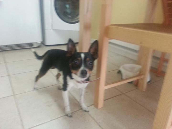 found dog 9-4-2013
