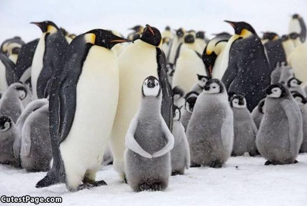 Penguin_Family