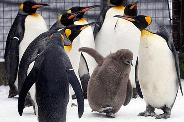 penguins-pic-pa-639751833