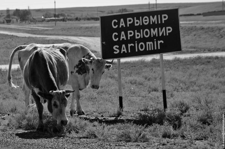 sariumir_26.jpg