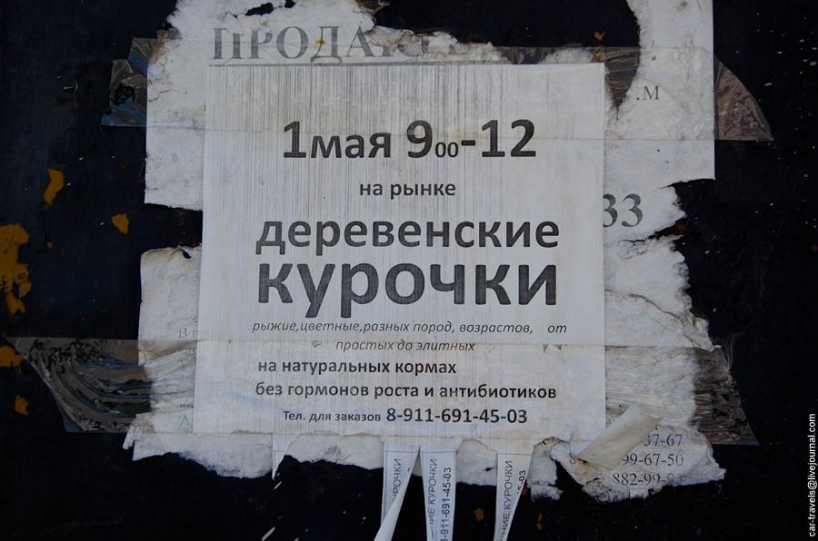 gdov_40.jpg