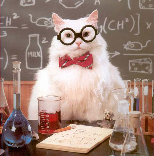 Cat-science1