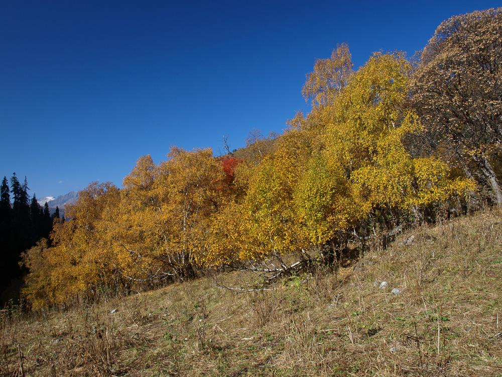 Загедан осень