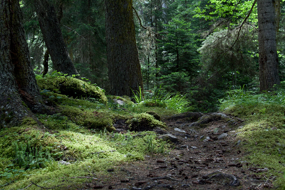 лес Уллу-Муруджу